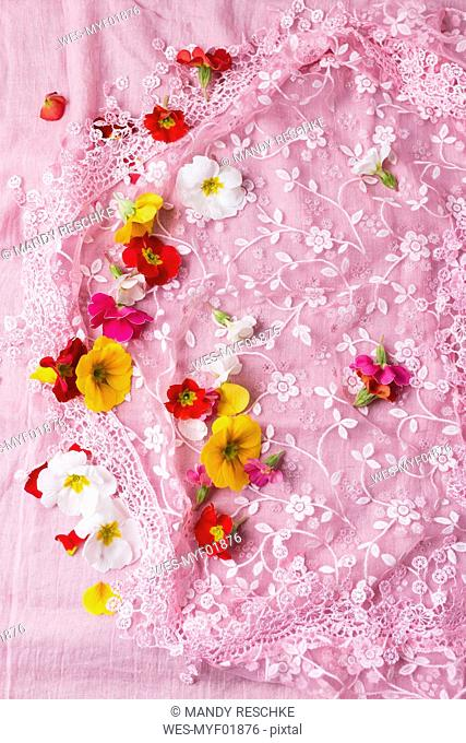 Blossoms of primroses on floral patterned pink cloth