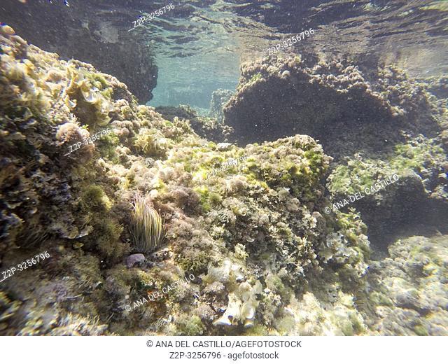 Underwater image Moraira beach Alicante Spain