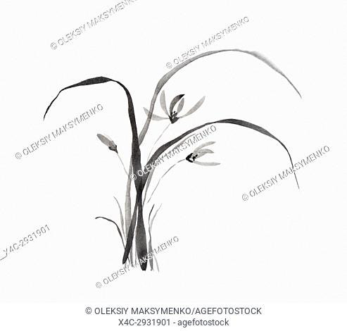 Wild orchid flowers Japanese Sumi-e Zen black ink painting illustration on rice paper white background