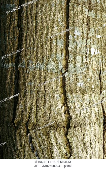 Tree trunk, close-up, full frame
