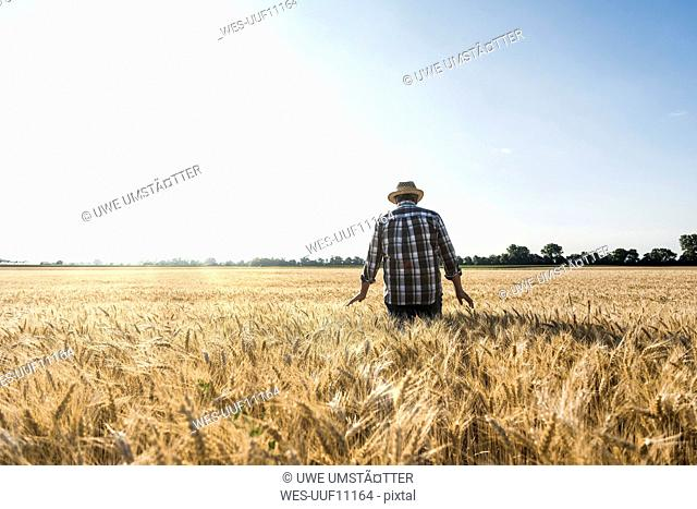 Back view of senior farmer standing in wheat field