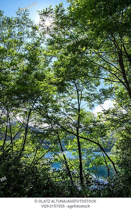 Embalse de Nuarbe reserovir through the trees, Basque Conuntry
