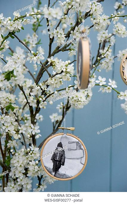 Embroidery frames with photographies printed on canvas hanging at blossoming sloe twigs