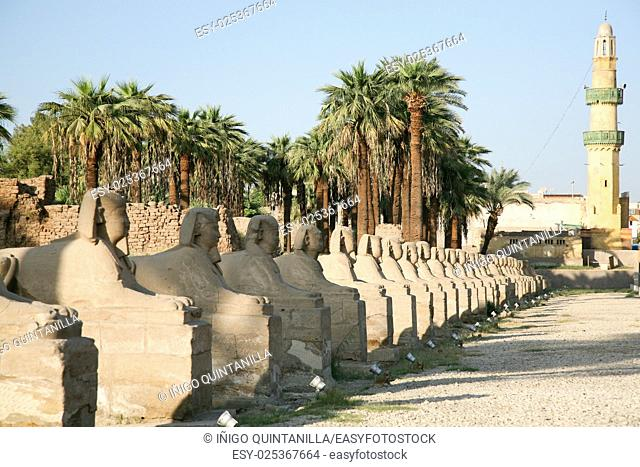 landmark sculpture of row sphinx statues human-headed with pharaoh Nekhtanebo, in avenue monument between Luxor and Karnak temples, in Thebes ancient city