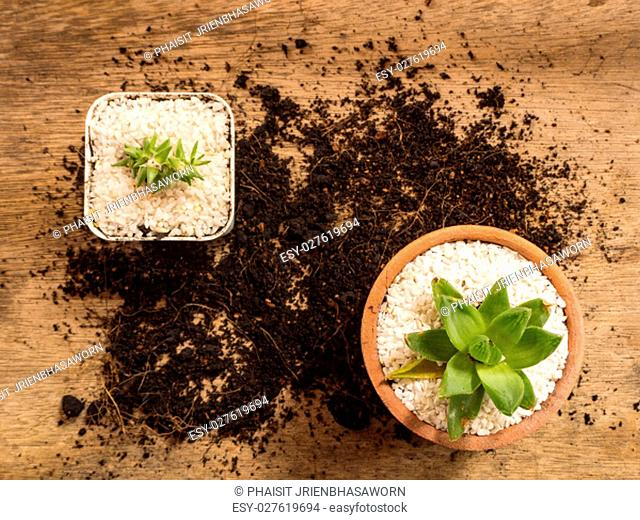 Succulent or Cactus in pot with soil, wooden background, top view