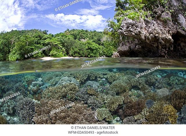 Split Image of Coral Reef, Raja Ampat, West Papua, Indonesia