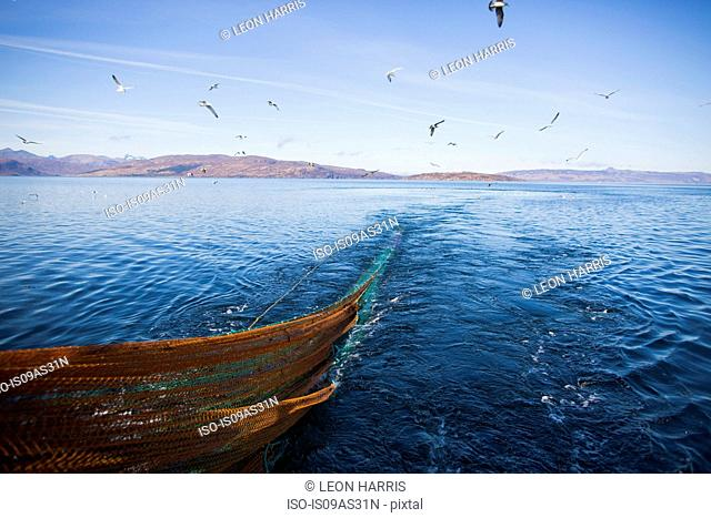 Seagulls following trawler, Isle of Skye, Scotland