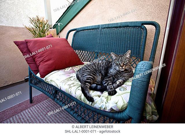 Cat on wicker love seat