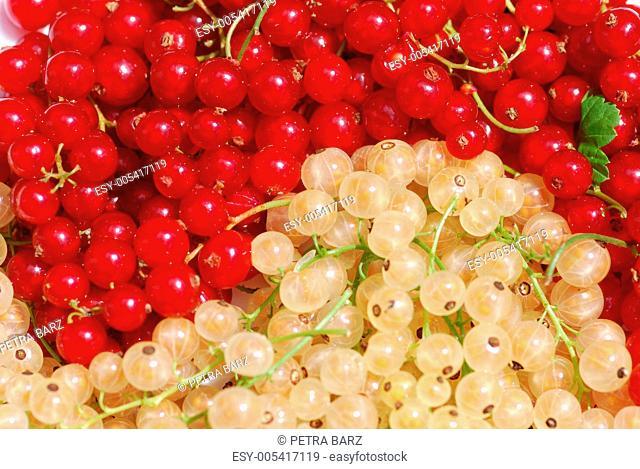 Rote und weisse Johannisbeeren Yin Yang