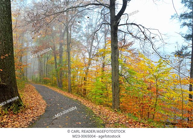 Fall and mist paint the forest around a walking path, Pennsylvania, USA