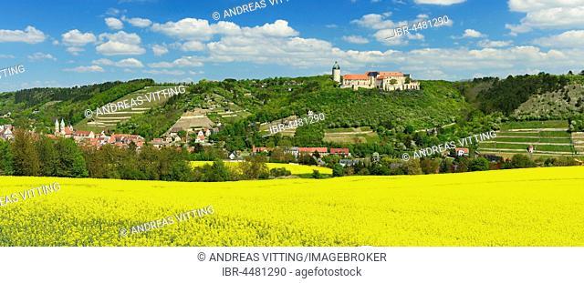 View of flowering rape field, Castle Neuchâtel, vineyards and Freyburg, Saxony-Anhalt, Germany