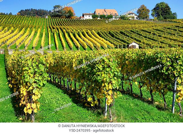 Europe, Switzerland, Canton Vaud, La Côte, vineyards in early autumn