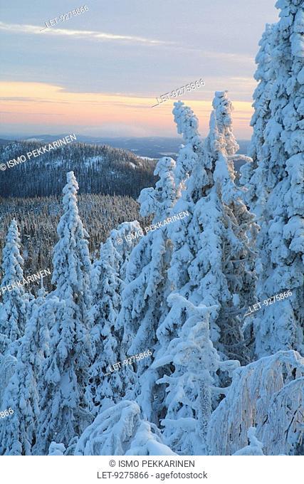 Snowy trees in Koli, Finland
