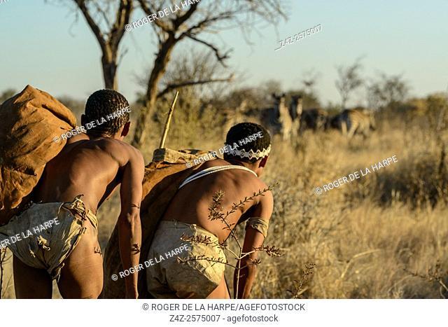 San or Bushman men stalking Burchell's zebra (Equus quagga burchellii). Haina Kalahari Lodge. Botswana