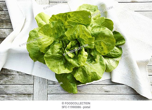 Oak leaf lettuce (topic: light suppers)