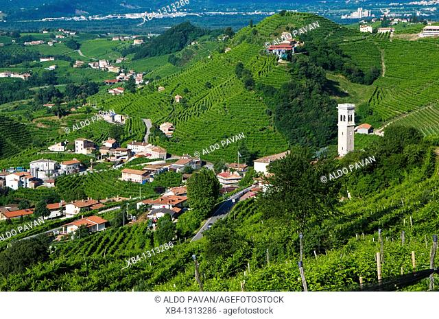 Italy, Valdobbiadene, Santo Stefano area, vineyards