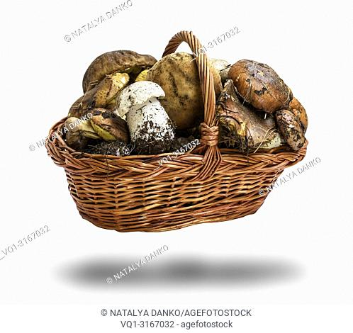 fresh forest mushrooms Suillus luteus and Boletus edulis in a wicker brown basket isolated on white background