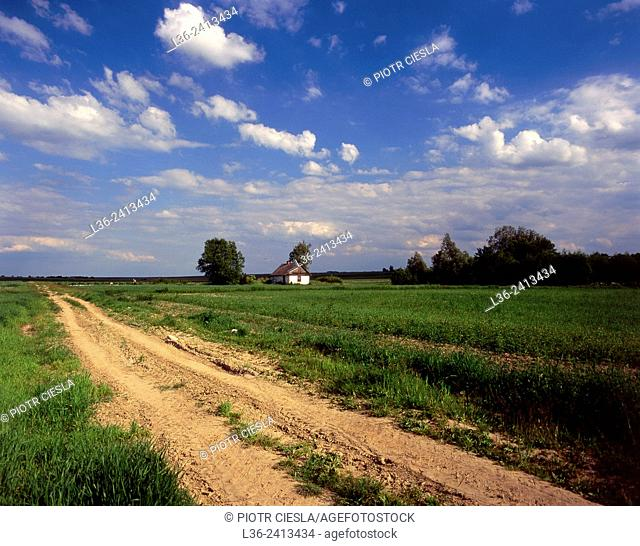 Country road. Lubelski region. Poland