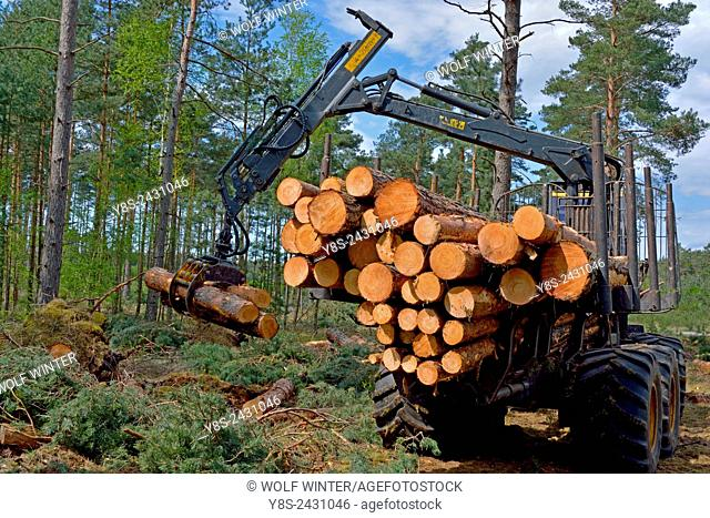 Charging a Forwarder. Wood Harvest after a Storm, Gifhorn, Lower Saxony, Germany