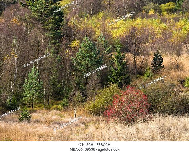 Germany, Bavaria, Rhön Biosphere Reserve, UNESCO biosphere reserve, Naturschutzgebiet Schwarzes Moor (nature reserve), moor grasses