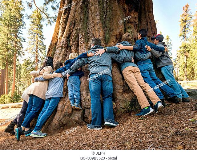 Group of people linking arms around tree, rear view, Sequoia National Park, California, USA