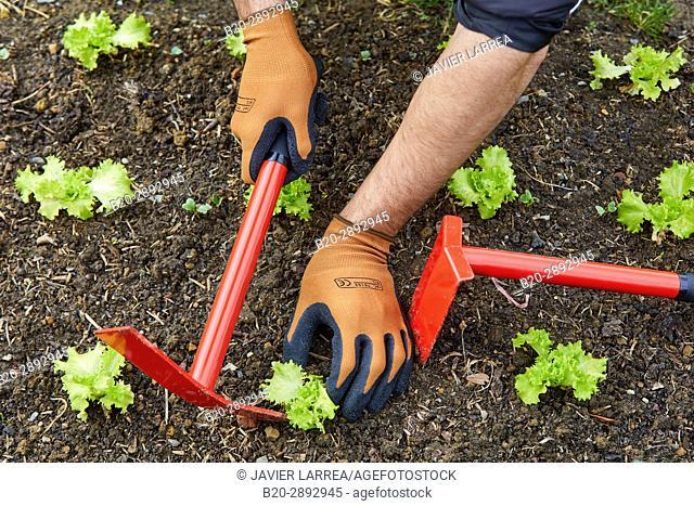 Farmer with hand tool, Hoe cultivator, Urban vegetable garden, Urban orchards, Ekogunea, Donostia, San Sebastian, Gipuzkoa, Basque Country, Spain