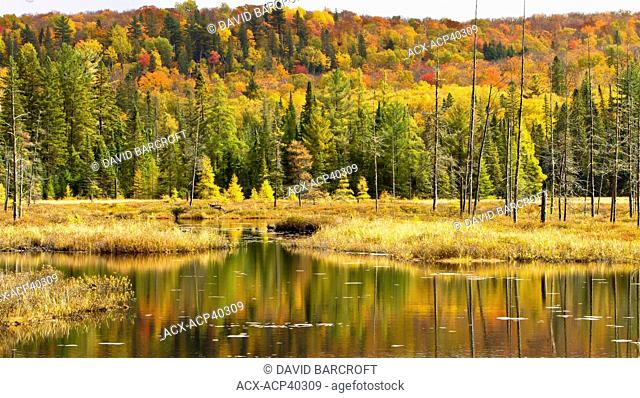 An autumn reflection of yellow, orange and red leaves in Algonquin Provincial Park, Ontario, Canada