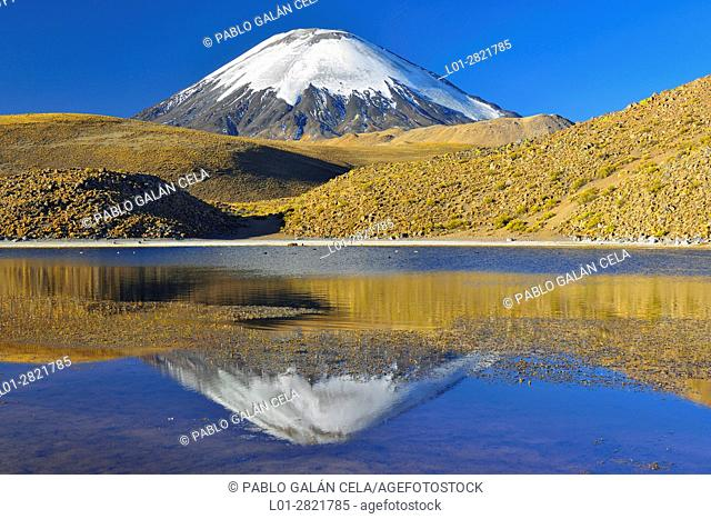 Parinacota volcano (6342 m) reflecting in Chungará lake. Lauca National Park. Norte Grande region. Chile