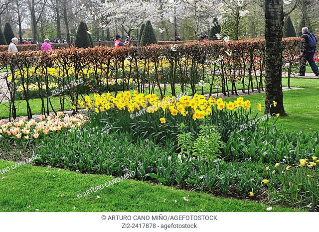 Tulips and narcissus in blossom. Keukenhof, Lisse, the Netherlands