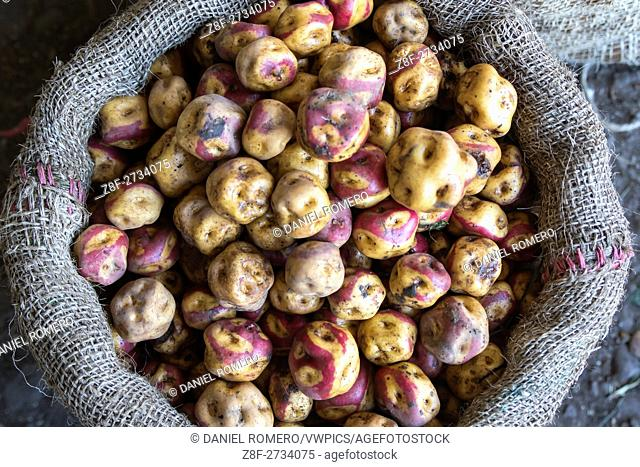 Potatoes. Tuesday is the day on which the Misak, Guambianos, Indigenous people reach the market to trade their products, vegetables, fruits and handicrafts