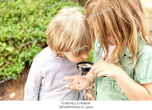 Boy and girl looking through magnifying glass on beetle