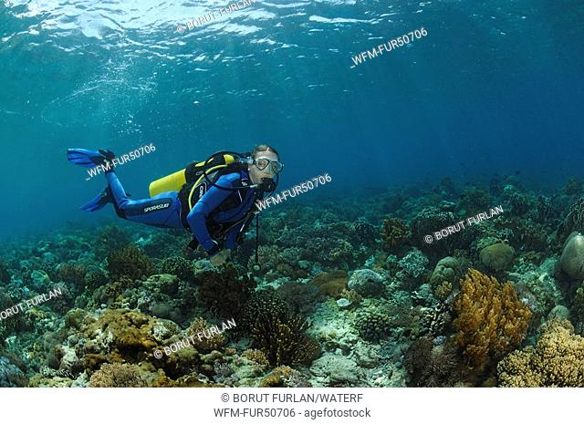 Diver over Coral Reef, Alor, Lesser Sunda Islands, Indo-Pacific, Indonesia