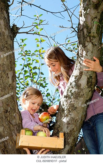 Two young girls picking apples from tree