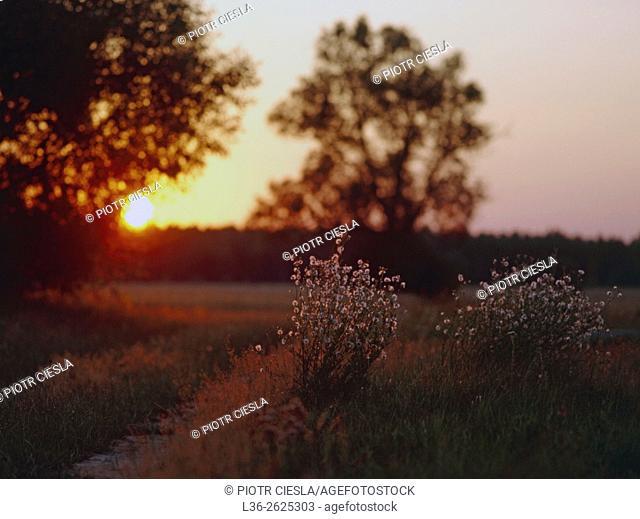 Sunset with burning flower. Poland