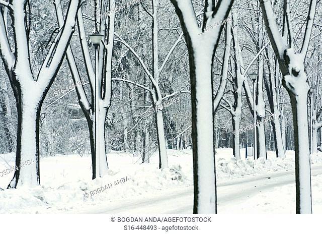 Winter scene in Herastrau Park - Bucharest, Romania