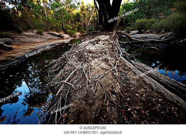 Lane Poole Reserve, Dwellingup, Australia