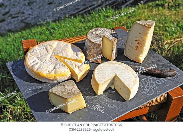 assorted PDO cheese of Savoie, cheese-making farm of Brunet family, Semnoz Mountain in the Bauges range, Haute-Savoie department, Rhone-Alpes region, France