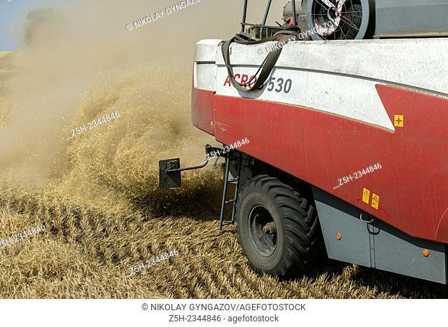 Harvest breads fields Belogoriya