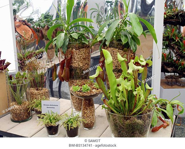 different carnivorous plant on an exhibithion