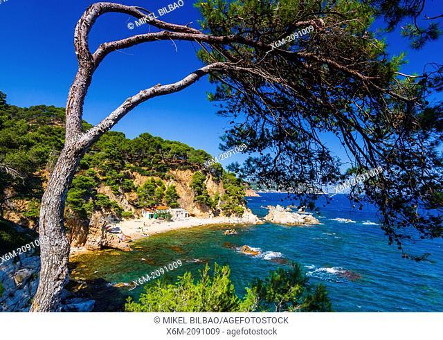 Crit cove. Cap Roig, Mont-Ras village, Gerona, Costa Brava, Catalonia, Spain, Europe