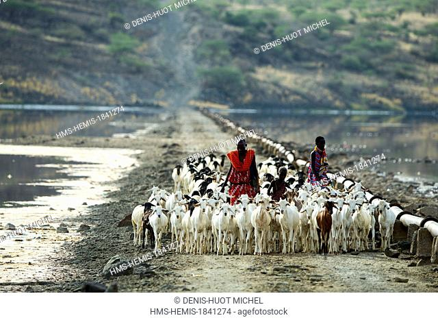 Kenya, lake Magadi, Masai people and cattle