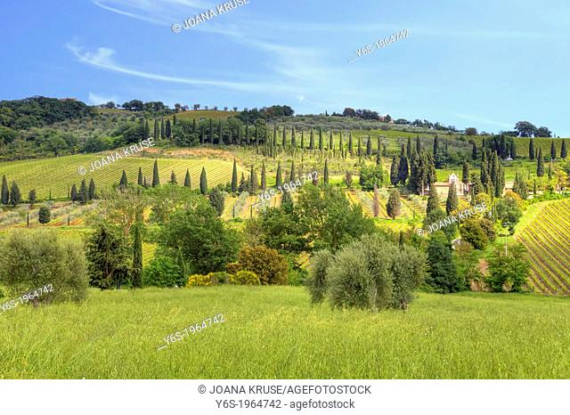 landscape with cypresses in Val d'Orcia, Tuscany, Italy