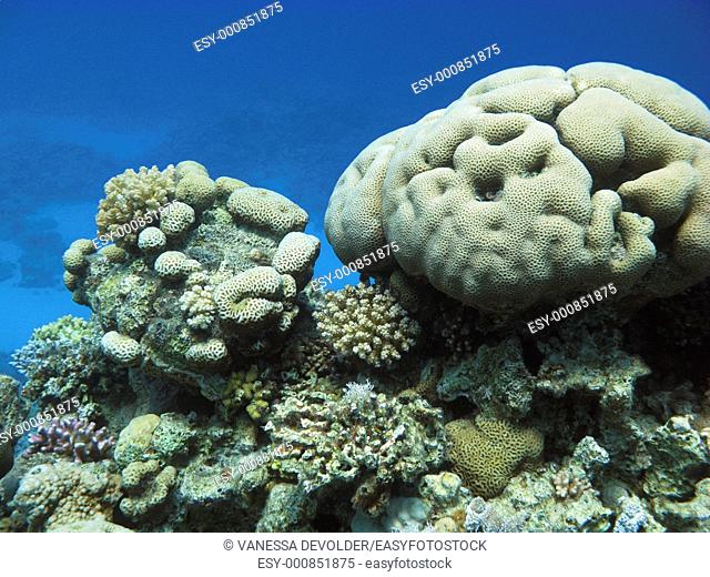 Location: The Coral Garden near Dahab in Egypt  Red Sea
