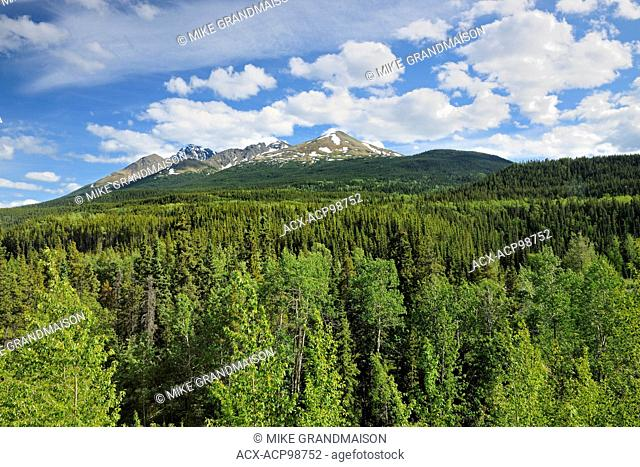 LAndscape near Good Hope Lake Stewart-Cassiar Highway British Columbia Canada