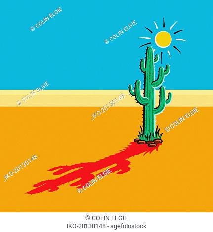 Shadow of cactus in sunny desert