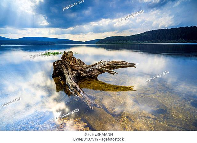dead tree in the clear water of storage lake Eibenstock with approaching thunder clouds, Germany, Saxony, Talsperre Eibenstock