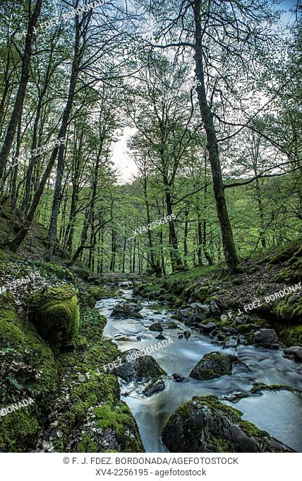 Arce Valley forest, Navarre, Spain