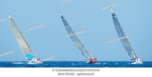 Sailboats at race