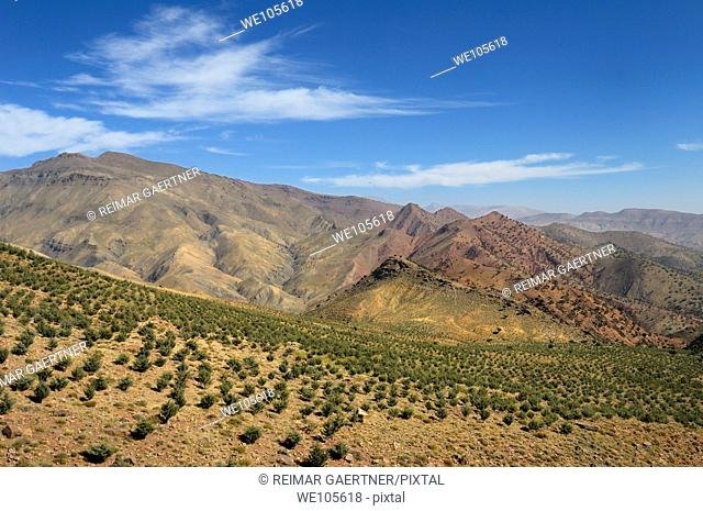 Reforestation project along the Tizi n Tichka Pass over the High Atlas mountains Morocco
