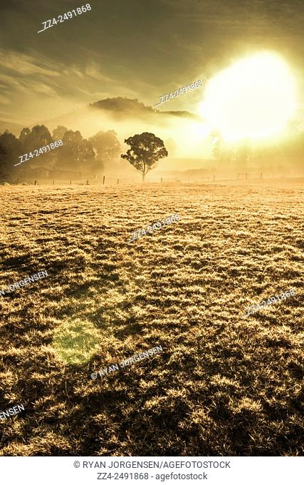 Morning sunlit scene of a empty misty field with distant tree in a backlight of haze. Judbury, Tasmania, Australia